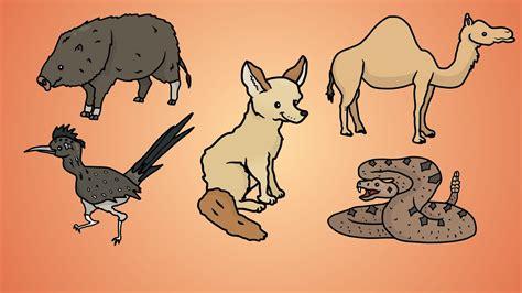draw    draw desert animals youtube