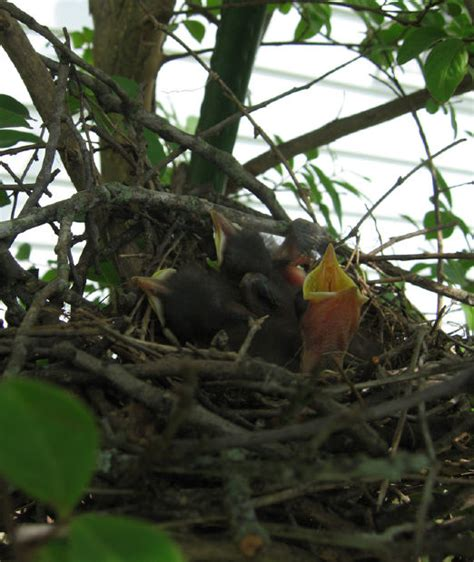 best 28 what to do with abandoned baby birds