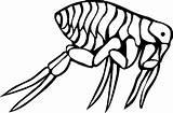 Coloring Flea Animal Bugs Bug Printable Cartoon Animals Sheet sketch template