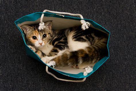 cats  bags life  cats