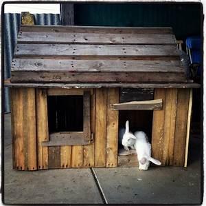 Maison Pour Lapin : blue dream lapins nains clapiers maisons ~ Premium-room.com Idées de Décoration