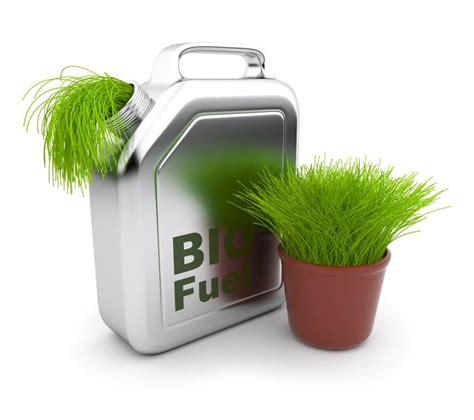 Биотопливо из водорослей плюсы и минусы технологии