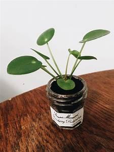 Calathea Blätter Rollen Sich Ein : pflanzenliebe meine liebsten zimmerpflanzen ~ Orissabook.com Haus und Dekorationen