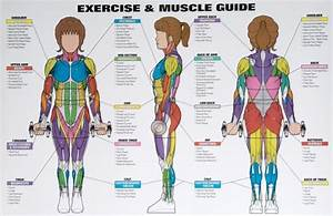 Weight Training Muscle Groups For Women