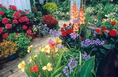 backyard plants and flowers plants for tropical gardens