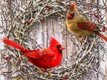 country cardinals birds animals background