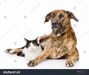 Dog And Cat Mixed Breed