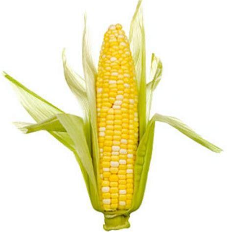 mais cuisine avez vous déjà gouté au maïs cru mixer deshydrater