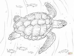 Loggerhead Turtle Coloring Page Free Printable Coloring