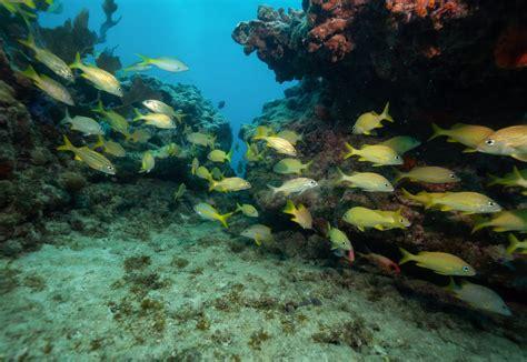 key west reef fishing july