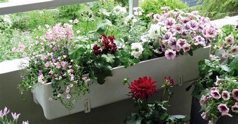 blumen für den balkon balkonblumen richtig einpflanzen mein sch 246 ner garten