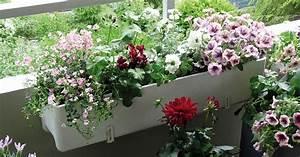balkonblumen richtig einpflanzen mein schoner garten With französischer balkon mit pflanzen für bienen im garten