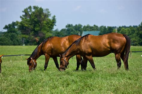 horses summer pasture horse kentucky university extension agriculture grazing pastures degree 3rd college management