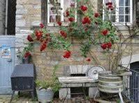 Wann Kletterrosen Schneiden : rosen vermehren eine anleitung garten mix ~ Watch28wear.com Haus und Dekorationen