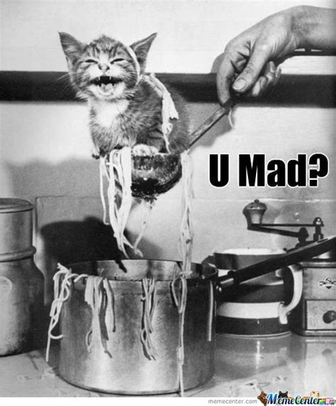 Mad Cat Meme - mad cat memes image memes at relatably com