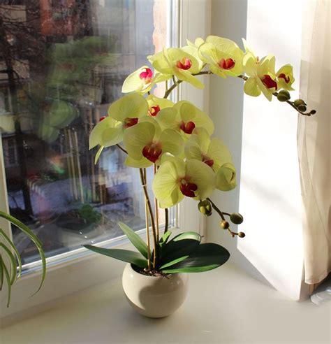 comment entretenir une orchid 233 e d 233 couvrez nos conseils de pro