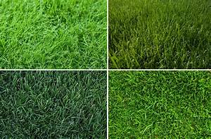 What's the best cool season grass? | Harmony - Outdoor Living