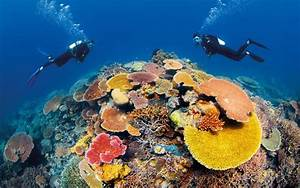 The Great Barrier Reef Is Not  U201cdead U201d  The Leader Of A New