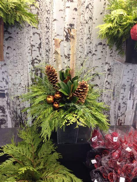 images  christmas spruce tip pots  pinterest