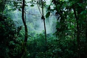 INTRAVELREPORT: Kuoni launch new dedicated wildlife ...