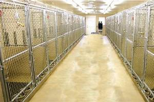 custom dog kennels for sale chain link dog pens With custom dog pens