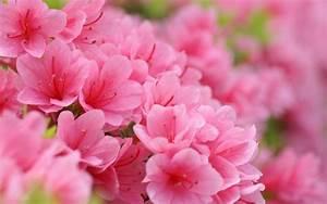 Cute Pink Flower – WeNeedFun