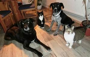Hund In Mietwohnung Trotz Verbot : hund in wohnung halten top hund und katz with hund in ~ Lizthompson.info Haus und Dekorationen