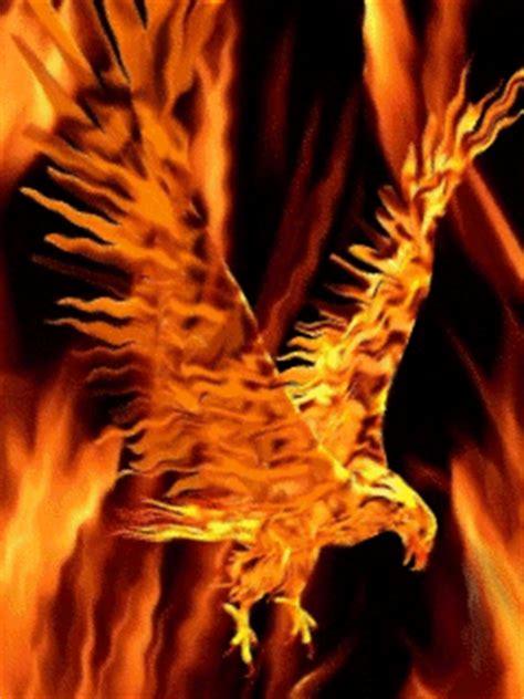 flames birds fire phoenix pictures   images