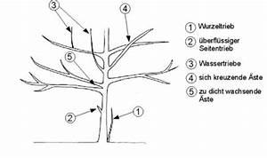 Wann Heidelbeeren Pflanzen : b ume schneiden ~ Orissabook.com Haus und Dekorationen