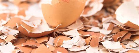 Is Eggshell Powder a Good Way to Get Calcium?   Berkeley