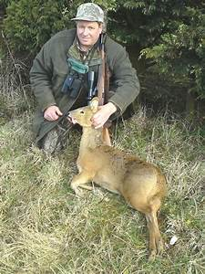 chinese water deer buck