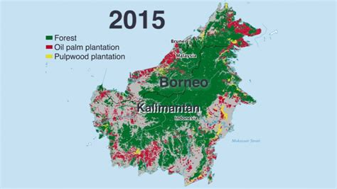 story  indonesias disappearing forests   charts