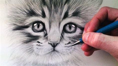 draw  kitten youtube