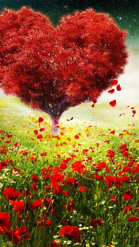 wallpaper love heart tree sunlight poppy flowers spring valentines day love