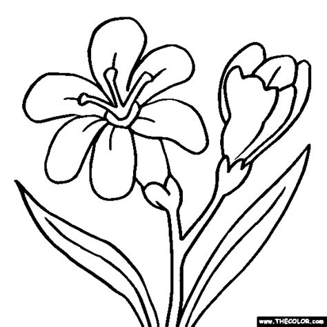 Coloring Drawings by Flower Coloring Pages Color Flowers Page 1