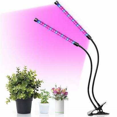 Grow Led Growing Knows Anybody Plant