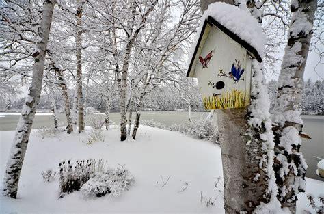 piante bellissime da giardino 5 bellissime piante da giardino per magici inverni