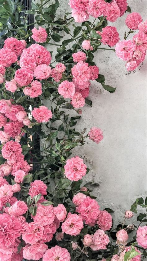 12 gorgeous floral iphone xs wallpapers preppy