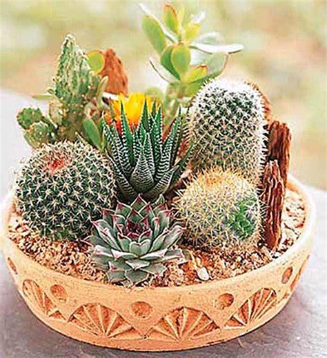 cactus dish garden 2016 new 60 cactus seeds mix organic ornamental seed