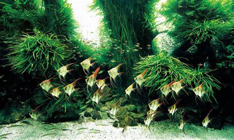 Aquascape Takashi Amano by Aquascaping Visionary Takashi Amano Dies At Age 61 Reef