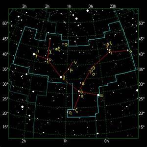 Sea Star Diagram