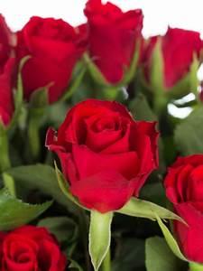 Hornspäne Für Rosen : rosen red calypso rot bestellen blumigo ~ Eleganceandgraceweddings.com Haus und Dekorationen