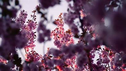 Flowers Pink Branches Spring Tree Flowering Background