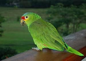 Parrot 20 Free Wallpaper