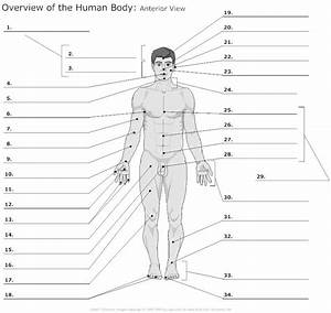 Body Regions Clipart For Ap