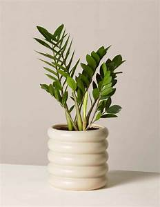 Common, Houseplants, Beautiful, Easy, To, Care, For, Indoor, Plants