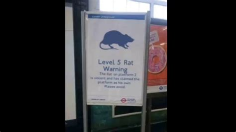 Of course, if you'd rather, you can email or fill out the form to let us know how we can help. Level 5 rat warning - YouTube