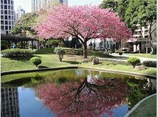 26º Haru Matsuri anuncia chegada da primavera em Curitiba
