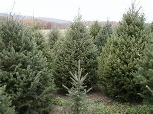 pleasant valley tree farm