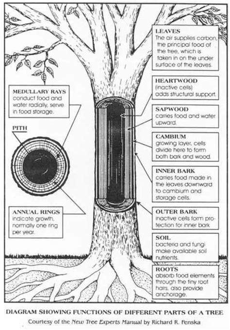 parts   tree tree study plant science science